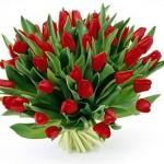 mama tulipany